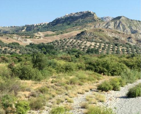 Oliven, Olivenöl, italienisch, Kalabrien, Bio